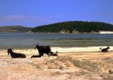 Laguna e Nartës e isla de Zvërnec, ubicación de un interesante monasterio ortodoxo